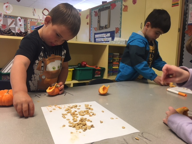 Tigers Pumpkin seed counting/Pinecone painting